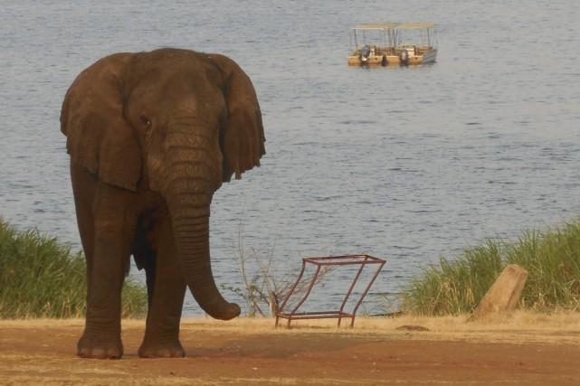Âgé d'environ 45 ans, Mutware serait le plus... (Photo fournie par Ophélie Chabant)