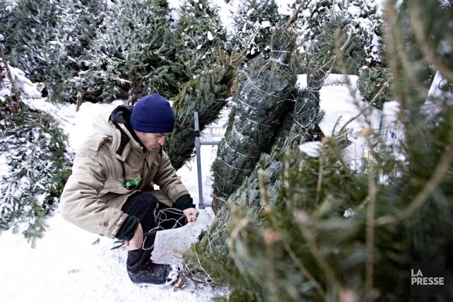 Souvent le coeur de la maison pendant les Fêtes, le sapin de Noël naturel... (Photo François Roy, Archives La Presse)