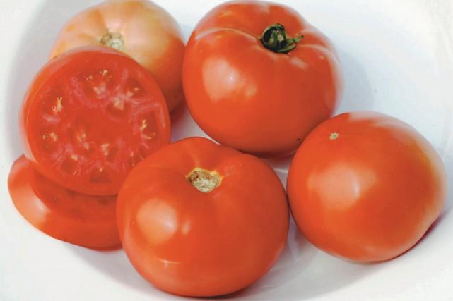 Sachant que les tomates sont carnivores, les mangeriez-vous... (PHOTO SEMENCES STOKES)