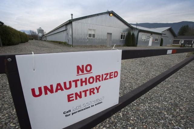 L'éclosion du virus a mené plusieurs pays asiatiques... (Photo Jonathan Hayward, La Presse Canadienne)