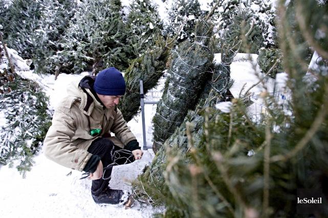 Selon l'Association des producteurs d'arbres de Noël du... (Photothèque Le Soleil)