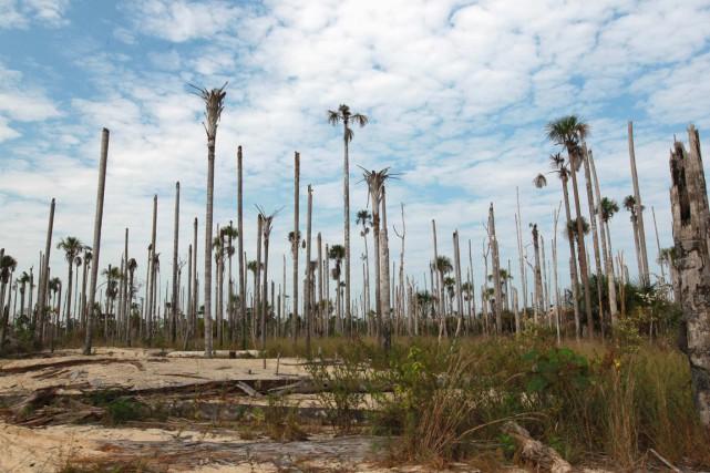 Une forêt dévastée dePuerto Luz, en Amazonie.... (PHOTO MIGUEL BELLIDO, REUTERS)
