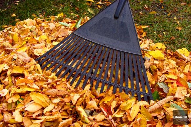 La collecte de feuilles mortes, de plates-bandes et... (Archives La Voix de l'Est)