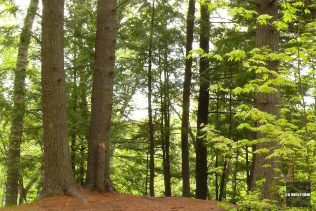 L'industrie canadienne des produits forestiers a la meilleure... (Photothèque Le Nouvelliste)