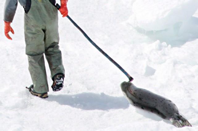 La Norvège et le Canada, plus gros chasseur... (PHOTO JONATHAN HAYWARD, ARCHIVES PC)