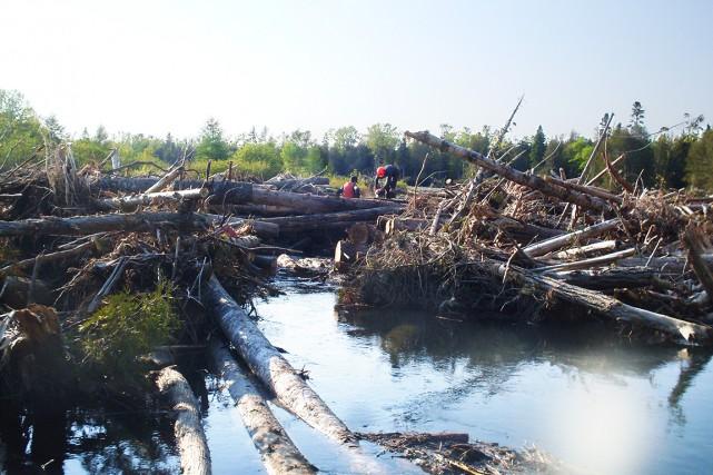 Le bois récupérable, soit 10 % d'un volume... (Photo Marcel Castilloux)