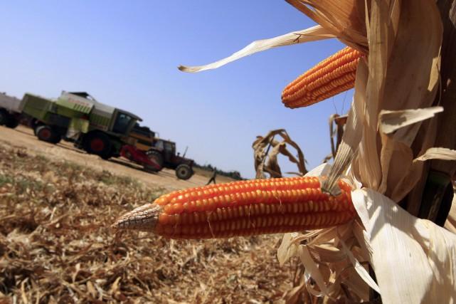 Les exportations actuelles de soja et de maïs... (Photo KHALED DESOUKI, Archives AFP)