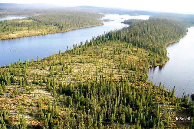 Avec la centralisation des activités forestières de la... (Photothèque Le Soleil)