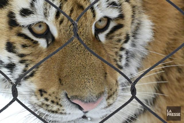 Le Zoo de Granby accueille les visiteurs pour... (Photo Bernard Brault, La Presse)