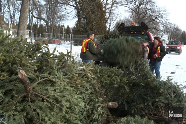 Annuellement, environ 20000 arbres de Noël sont récupérés... (Photo Martin Chamberland, archives La Presse)