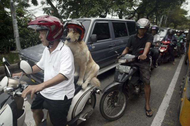 Subaya, deuxième ville indonésienne, est également au centre... (PHOTO JUNI KRISWANTO, ARCHIVES AFP)