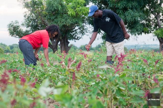 Cinq ans après le tremblement de terre qui a secoué Haïti, la reconstruction... (Archives La Tribune, Jessica Garneau)