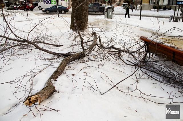 De nombreuses branches ont cédé sous le poids... (Photo Alain Roberge, La Presse)