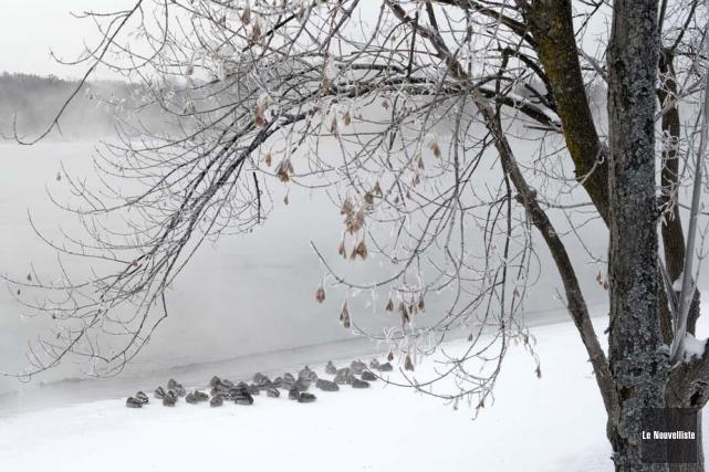 Il a fait un véritable froid de canard... (Photo: Sylvain Mayer, Le Nouvelliste)