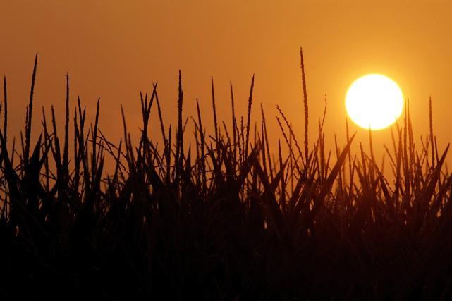 Les relevés de température sont effectués depuis 1880.... (PHOTO SETH PERLMAN, ARCHIVES ASSOCIATED PRESS)