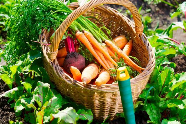 La popularité de l'agriculture en milieu urbain ne... (Photo Shutterstock, Max Topchii)