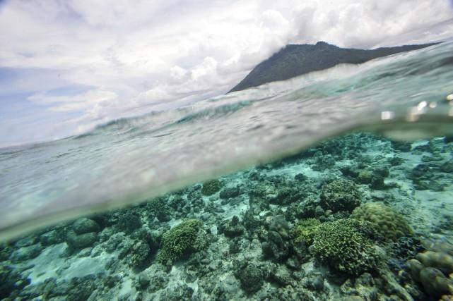 La montée des océans, l'impact du réchauffement sur les écosystèmes marins et... (PHOTO ROMEO GACAD, ARCHIVES AFP)
