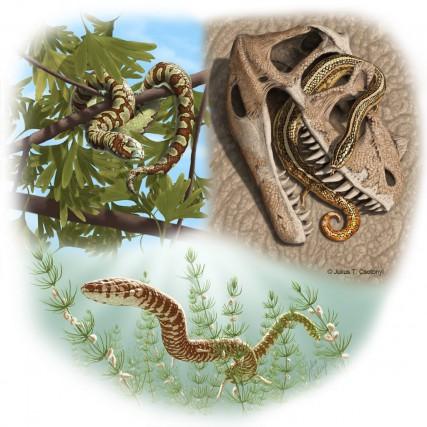 En examinant les restes fossilisés de serpents faisant... (PHOTO LA PRESSE CANADIENNE)