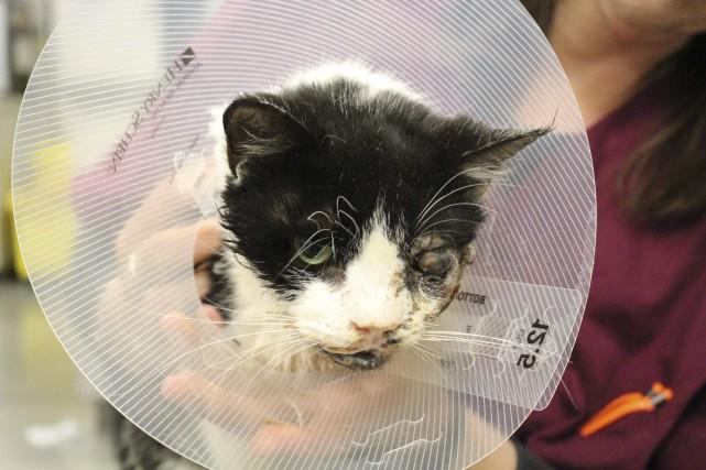 Le chat a été opéré mardi. Les vétérinaires... (PHOTO REUTERS)