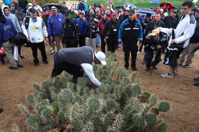 Tiger Woods a envoyé sa balle dans des... (Photo Allan Henry, USA Today Sports)