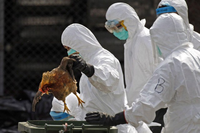 En Chine, 470 cas de virus H7N9 ont... (Photo Vincent Yu, La Presse canadienne AP)