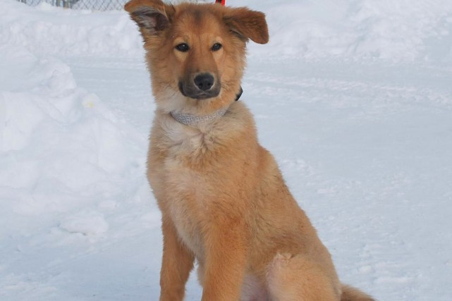 La chienne Mandy a été retrouvée à Drummondville...