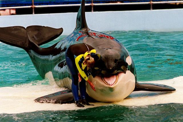«Nous considérons que le statut d'animal en captivité... (Photo: AP)