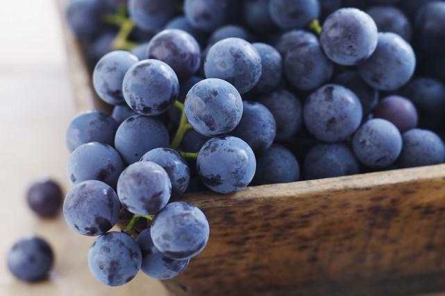 Leresvératrol se retrouve dans les raisins rouges.... (Photo Digital/Thinkstock)