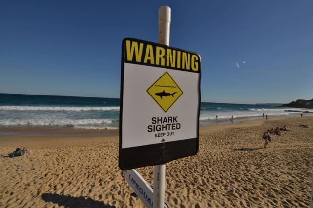 Un homme a été tué par un requin lundi au large de la côte est de l'Australie,... (Photo: AFP)