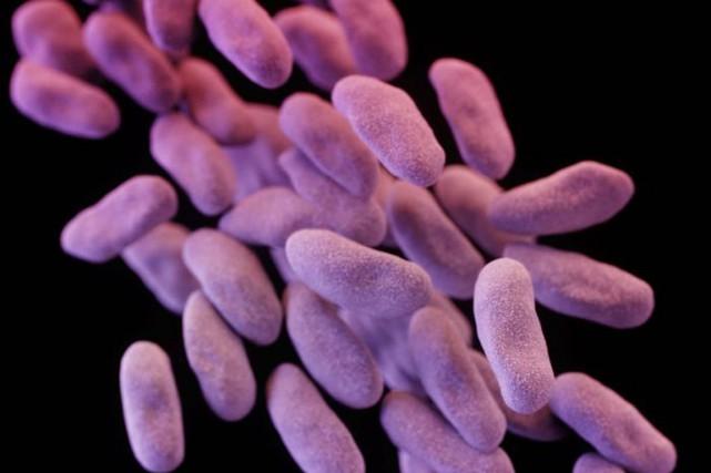 Les bactéries résistantes aux carbapénèmes sont particulièrement dangereuses... (PHOTO REUTERS/CDC)