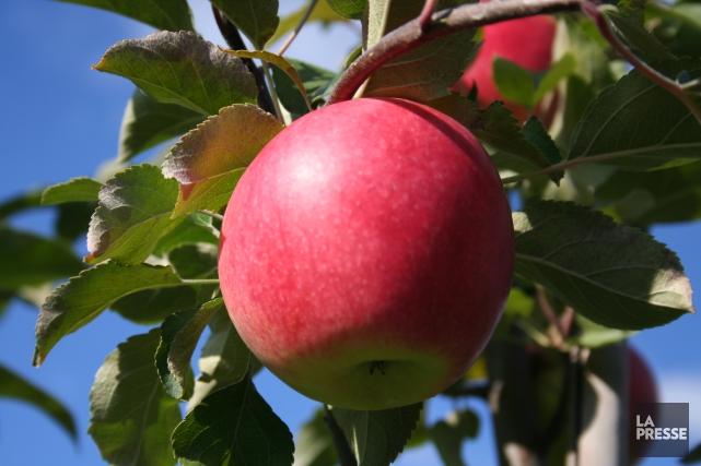 La Fédération des producteurs de pommes du Québec se dit préoccupée de... (Archives La Presse)
