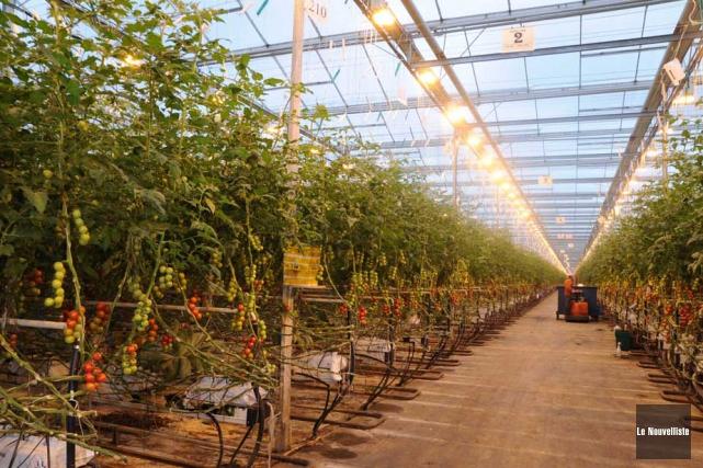 Le plus grand producteur de tomates de serre... (Photo Sylvain Mayer, Le Nouvelliste)