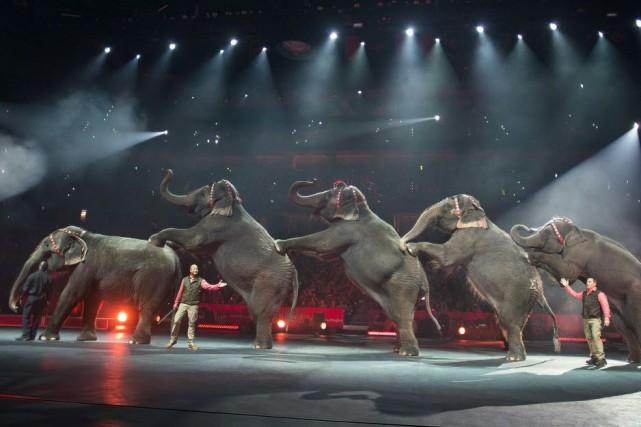 Feld est propriétaire de 43 éléphants, dont 29... (Photo Feld Entertainment Inc., Gary Bogdon, AP)