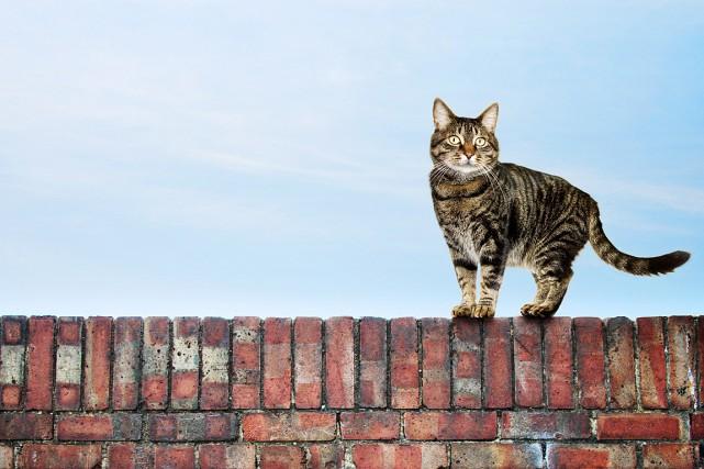 Un sondage de l'Association des médecins vétérinaires du... (PHOTO MASTERFILE)