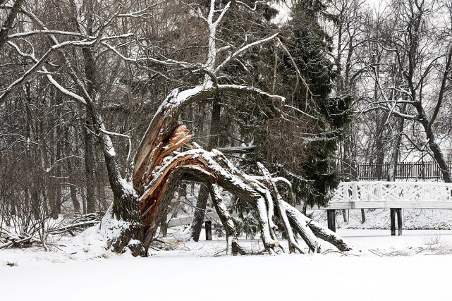 Les branches brisées par les grands vents ou... (PHOTO THINKSTOCK)
