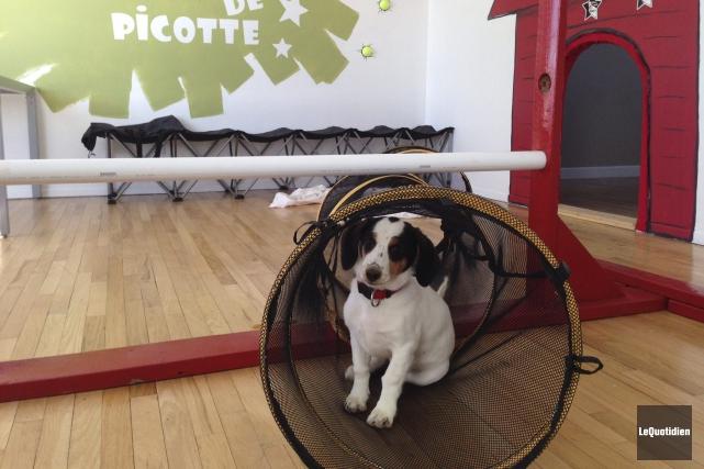 Bulle a été confiée au centre d'entraînement pour... ((Photo Le Quotidien, Mélyssa Viau))