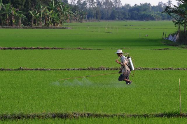 Un homme répand des pesticides dans un champ... (Archives Agence France-Presse)