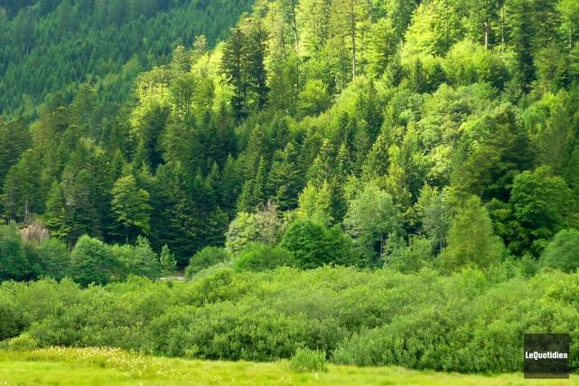 Dans les dernières semaines, le secteur forestier du... ((Archives Le Quotidien))