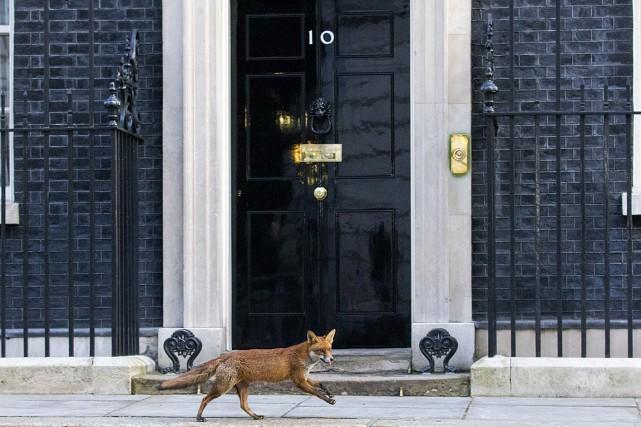 Un renard est passé ce matin devant le... (PHOTO JUSTIN TALLIS, AGENCE FRANCE PRESSE)