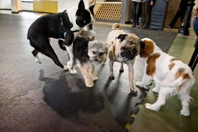 Les chiens qui ont des réactions excessives lorsqu'ils... (PHOTO GALIT RODAN, ARCHIVES PC)