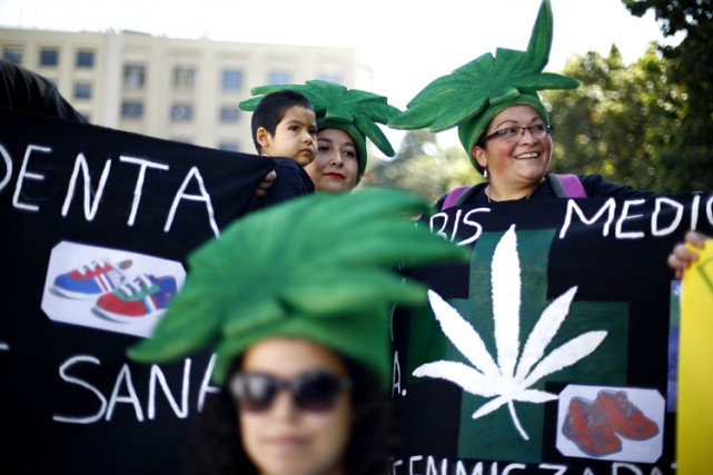 Un projet de loi visant à dépénaliser la culture de cannabis à usage personnel... (Photo: Reuters)