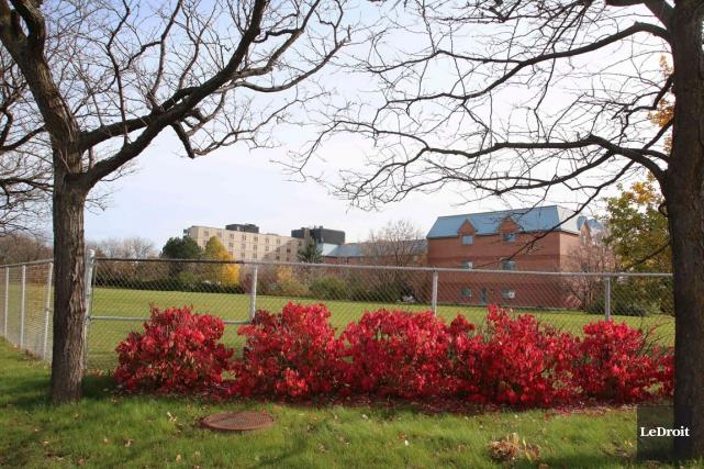 Le terrain où les trois médecins souhaitent construire... (Patrick Woodbury, Archives LeDroit)