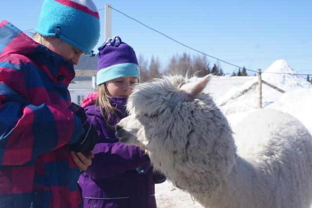 Angie adore la présence des humains et particulièrement... ((Photo courtoisie, Alexand Lavoie))