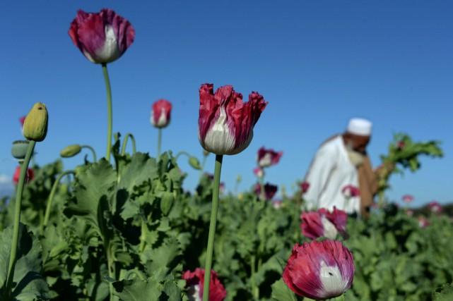 L'Iran est l'une des principales voies d'acheminement vers... (Photo Noorullah Shirzada, AP)