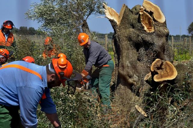 Des agents forestiers du sud de l'Italie ont abattu les premiers de quelque... (Photo: AP)