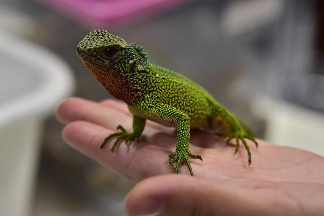 La récente découverte, en Équateur et au Pérou, de trois nouvelles espèces de... (PHOTO RODRIGO BUENDIA, ARCHIVES AGENCE FRANCE-PRESSE)