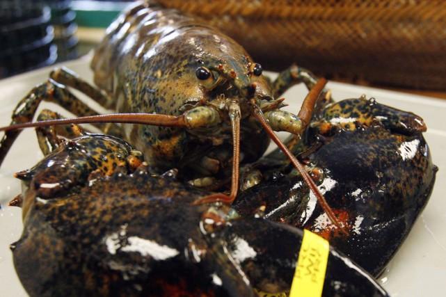 Les pêcheurs et les consommateurs de homard devront patienter une semaine avant... (Photo archives AP)