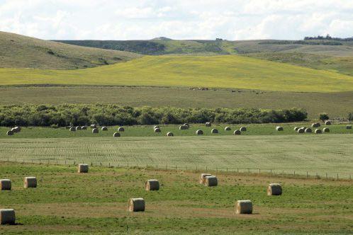L'agriculture canadienne traverse une période exceptionnelle.... (Photo HELENA LONG, Reuters)