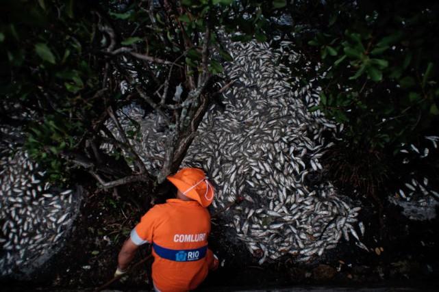 Dans un communiqué, le secrétariat municipal à l'environnement... (PHOTO YASUYOSHI CHIBA,  AFP)