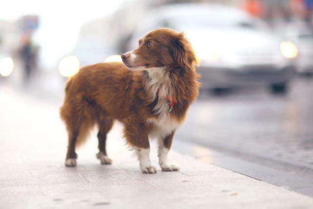 «À peu près tous les animaux qui cherchent... (Photo Shutterstock, Kichigin)